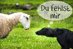 O cão encontra carneiros, Du Fehlst Mir Means mim senhorita You imagem de stock