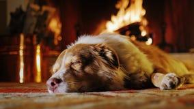 O cão encontra-se em um fundo de uma chaminé com lenha e cubetas Aconchego e conforto, casa morna vídeos de arquivo