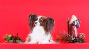 O cão encontra-se em um fundo vermelho com decorações do Natal Fotos de Stock Royalty Free