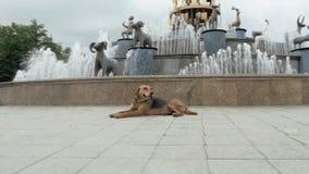O cão encontra-se na estrada, Geórgia, Kutaisi filme