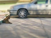O cão encontra-se na terra ao lado do carro Imagens de Stock
