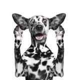 O cão escuta atentamente alguns sons estranhos Imagens de Stock Royalty Free