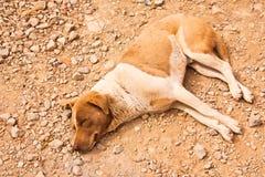 O cão está dormindo. imagem de stock