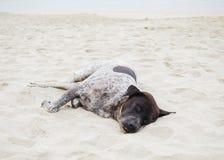 O cão está dormindo na praia Fotografia de Stock Royalty Free