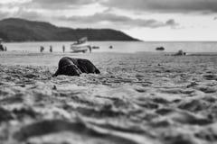 O cão está encontrando-se na areia Imagem de Stock
