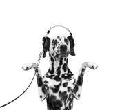 O cão está escutando a música e a dança Imagens de Stock
