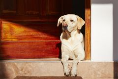 O cão está esperando imagem de stock