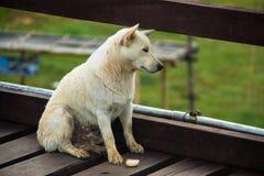 O cão está faltando seu proprietário e está sentindo-o triste fotos de stock