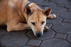 O cão está faltando seu proprietário e está sentindo-o triste foto de stock
