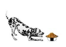 O cão está indo comer da bacia Foto de Stock