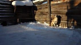 O cão está jogando perto de uma casa na vila filme