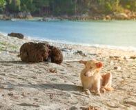 O cão está na praia Fotografia de Stock Royalty Free