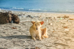 O cão está na praia Foto de Stock