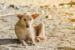 O cão está na praia Fotos de Stock