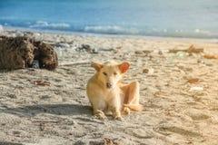 O cão está na praia Imagens de Stock Royalty Free