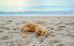 O cão está na praia Imagem de Stock