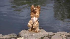 O cão está nos pés traseiros perto do lago vídeos de arquivo