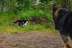 O cão está olhando o gato na natureza imagem de stock