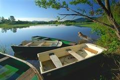 O cão está saltando no lago Imagem de Stock