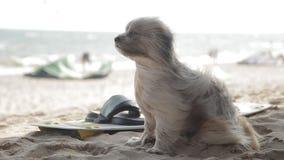 O cão está sentando-se na praia e apreciar acena O vento está fundindo através de sua pele video estoque
