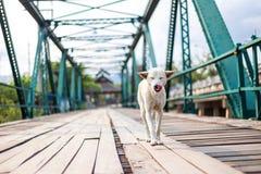 O cão estava andando na ponte memorável Fotos de Stock