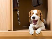 O cão faltante. Imagens de Stock Royalty Free