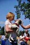 O cão feliz Fotografia de Stock Royalty Free