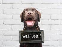 O cão feliz com o quadro com texto bem-vindo diz olá! o we're da boa vinda aberto contra a parede exterior do tijolo branco fotografia de stock royalty free