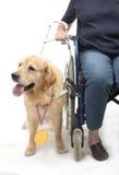 O cão ganhou uma medalha dourada Foto de Stock