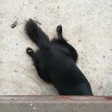 O cão gosta de jogar o esconde-esconde Fotos de Stock Royalty Free