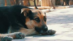O cão grande bonito desabrigado encontra-se em uma rua da cidade vídeos de arquivo