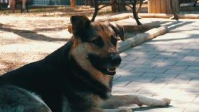 O cão grande bonito desabrigado encontra-se em uma rua da cidade filme
