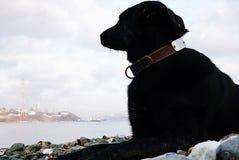 O cão grande encontra-se em um Pebble Beach e em olhares para o mar e a costa oposta imagem da pintura a óleo ilustração do vetor