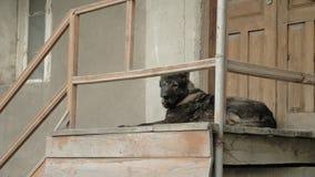 O cão irritado guarda a casa nas etapas, Mestia, Geórgia filme