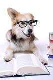 O cão lê o livro Imagens de Stock
