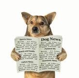 O cão lê um jornal fotografia de stock royalty free