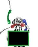 O cão mantém o quadro em seus pata e telefone em suas boca e pata Foto de Stock