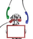 O cão mantém o quadro em seus patas e telefone em sua boca Foto de Stock Royalty Free
