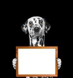 O cão mantém o quadro em suas patas Fotos de Stock Royalty Free
