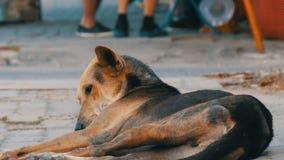 O cão marrom-preto desabrigado encontra-se na rua em Tailândia vídeos de arquivo