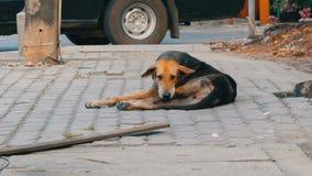 O cão marrom-preto desabrigado encontra-se na rua em Tailândia video estoque