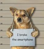 O cão mau quebrou o smartphone fotografia de stock