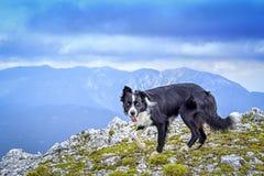 O cão na parte superior da montanha fotos de stock