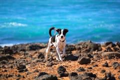 O cão na praia Fotos de Stock Royalty Free