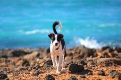 O cão na praia Imagem de Stock