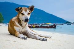 O cão na praia Foto de Stock Royalty Free