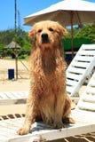 O cão na praia do DUA de Nusa Foto de Stock