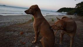 O cão na praia, o cão no mar Fotos de Stock
