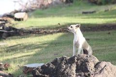 O cão na rocha Imagens de Stock Royalty Free