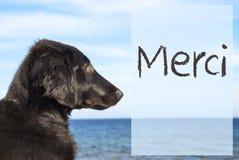 O cão no oceano, meios franceses de Merci do texto agradece-lhe Fotografia de Stock